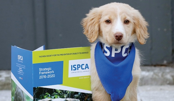 ISPCA | Emarkable Client Case Study - Emarkable.ie